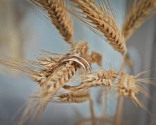 Grain: rye, wheat and barley at the wedding?